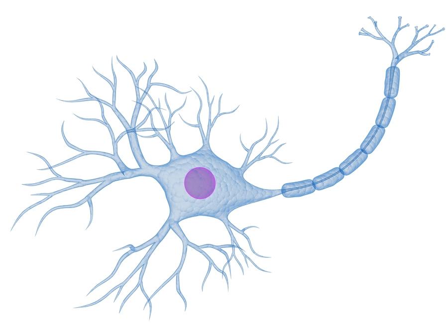 Wissenswerztes Multiple SkleroseNeuron Unlabeled